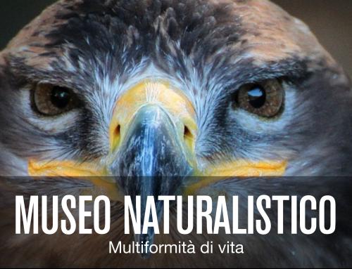 Museo Naturalistico degli Alburni: le offerte!